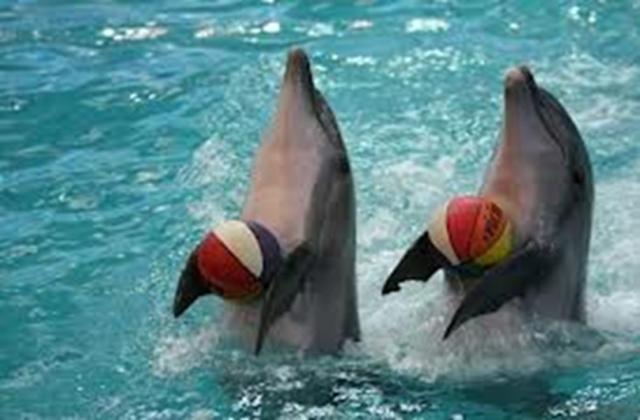 dolphin balls